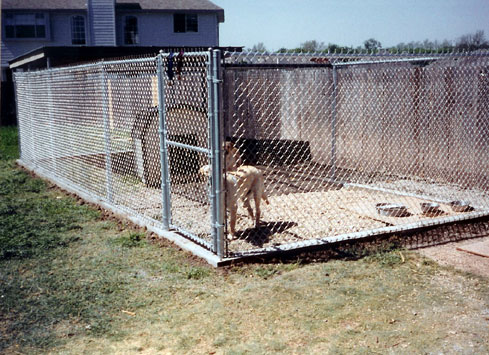 galvanized chain link fence dog kennel